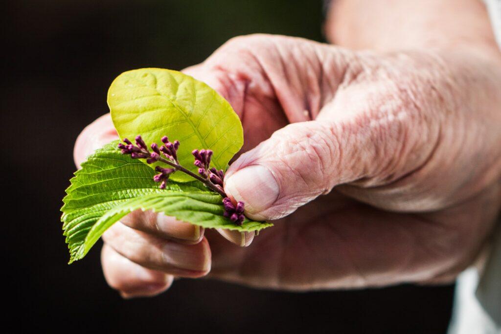 stymulacja sensoryczna w chorobie Alzheimera